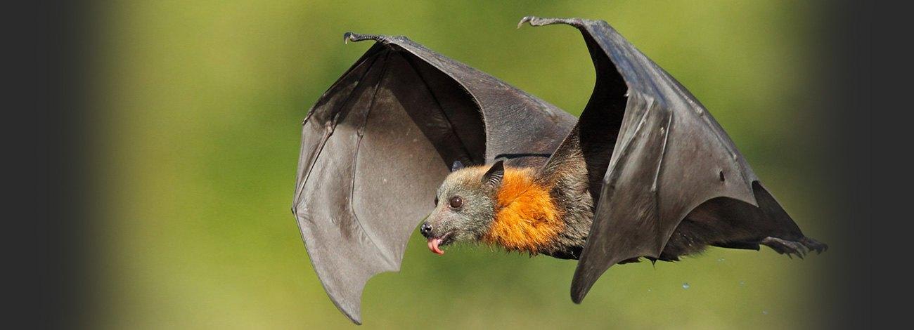 SPOOKY Bats Flying Around My Condo in Medellin
